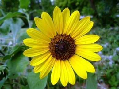 Wild Sunflower Seeds