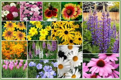 All-Perennial Wildflower Seed Mix