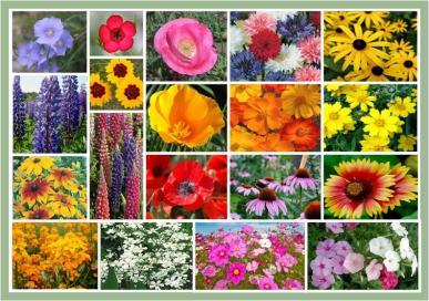Burst of Bloom All-Purpose Wildflower Mix