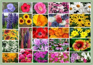 Northeast Wildflower Seed Mix- 1/4 Pound