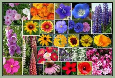 Pacific Northwest Wildflower Seed Mix- 1/4 Pound