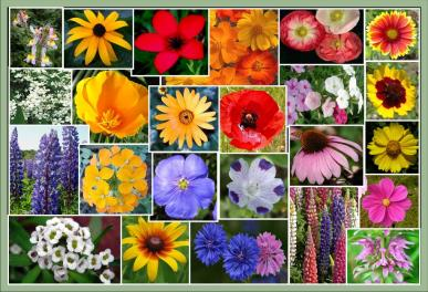 Southeastern States Wildflower Mix - 1/4 Pound