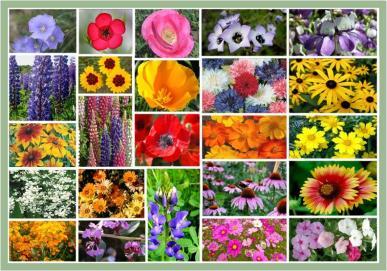 Southwest Wildflower Seed Mix- 1/4 Pound